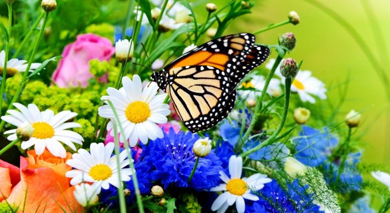 Fiori e banchi di primavera for Fiori di primavera