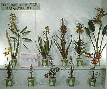 Museo di Storia Naturale Sez. di Botanica