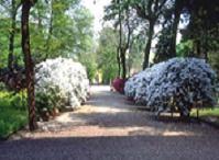 Giardino dei Semplici - Museo di Storia Naturale