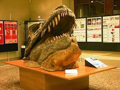 Geology and Paleontology Museum