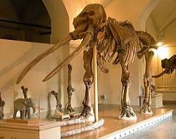 Museo di Storia Naturale Sez. Geologia e Paleontologia