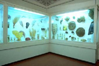 Museo di Storia Naturale Sez. di Zoologia La Specola