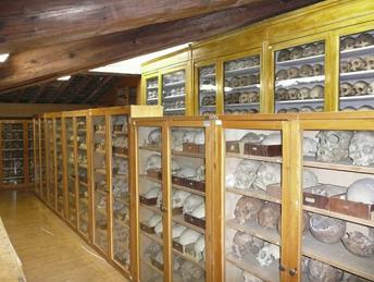 Museo di Storia Naturale Sez. di Antropologia e Etnologia